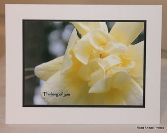 photo card, thinking of you, yellow rose, flower, photography