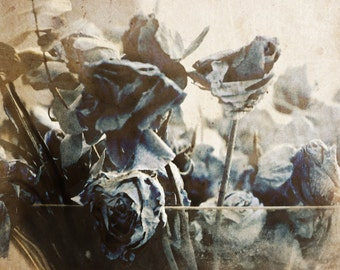 SEPIA blue dried roses Fine art photography print, retro antiqued rustic nature photo 10X12 inch limited edition shabby chic home, old paper