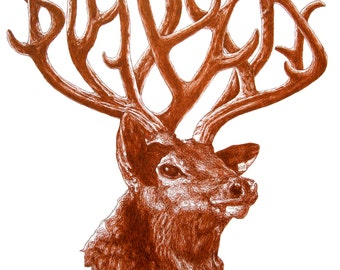 Big Bucks - original deer illustration pen and ink sienna drawing