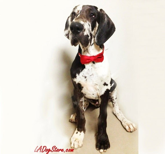 Red dog bow tie christmas gift unique gift idea dog lovers for Unusual dog gifts
