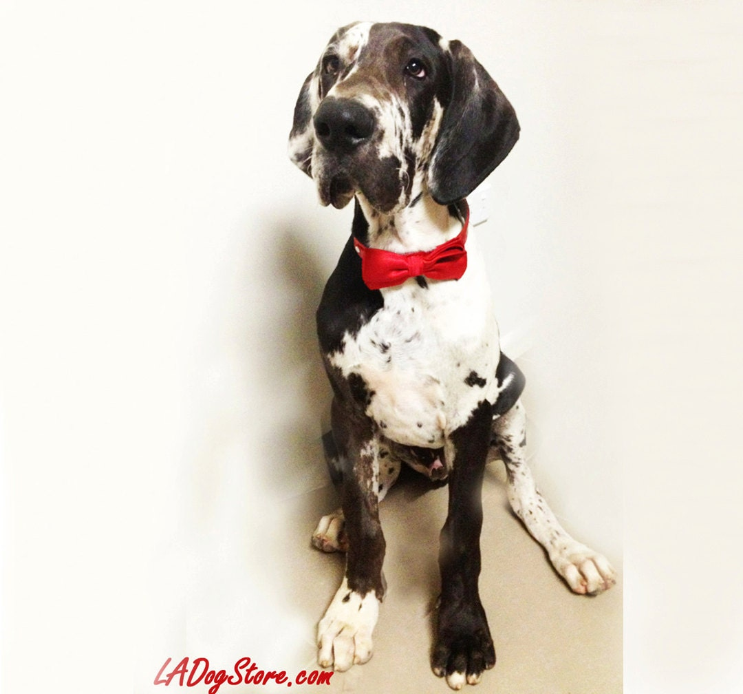 Red dog bow tie christmas gift unique gift idea dog lovers for Unique christmas gifts for dog lovers
