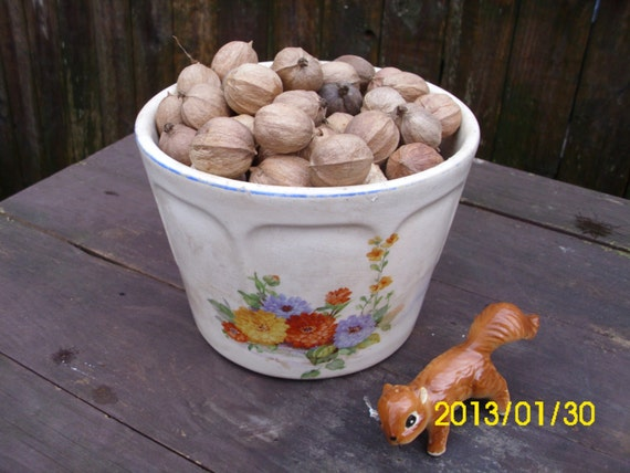 Hickory Nuts For Crafting/Wreath Making/Decoration/Wildlife