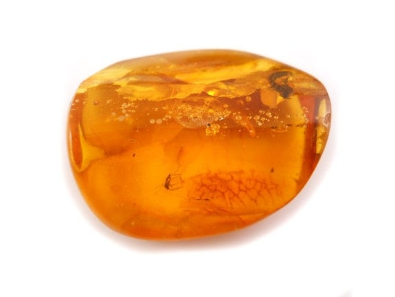 Natural Baltic Amber - cognac - 2 INSECT -26x21mm - Unique collectable - Fly / sawfly and Maggot