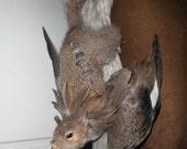 squirrel taxidermy griffin