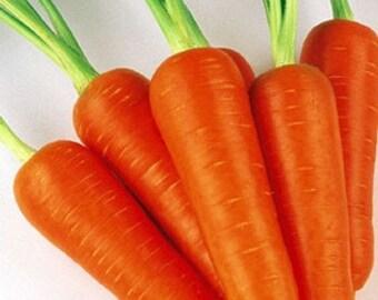 Heirloom, Little Finger Carrot, Garden Seeds, Mini Carrots, 25 Seeds