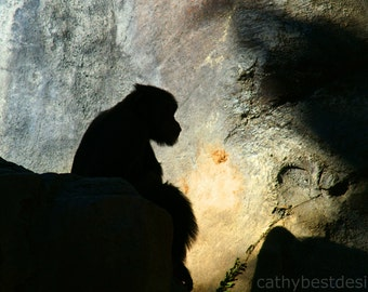 Chimanzee Silhouette Fine Art Photograph 'Chimp and the Darkness' Wall Art