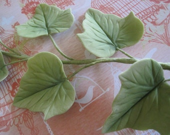 Sugar Ivy Vine