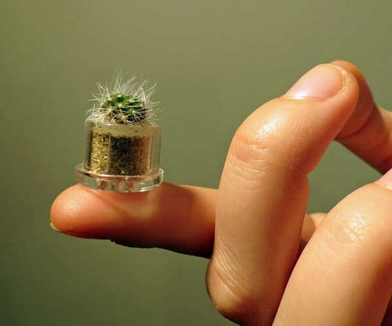 Gift Guide for Nature Lovers - International Shipping. Fluffy - Live Cacti Terrarium Plant Flower - Boo-Boo Plant - miniature pet plant living inside a capsule, Unique living wearable nature gift terrarium.