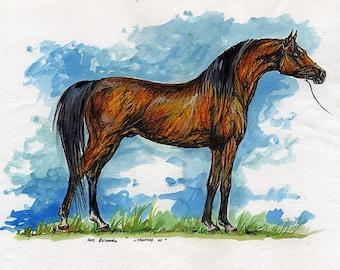 Negatraz, bay arabian horse original ink and watercolor painting