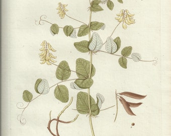 Antique Original 1786 Kerner Botanical Engraving  Print Bookplate Plate Astragalus Glycyphyllos 267