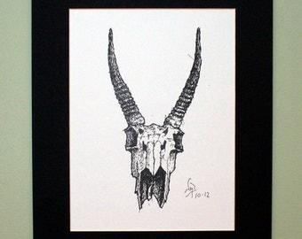 Gazelle Skull