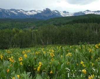 Sun Flowers and Castle Peaks Ohio Pass, Colorado - Fine Art Photograph 8 x 10 Print