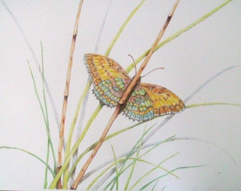 Bamboo Butterfly Original Colored Pencil Art Print, Wall Decor