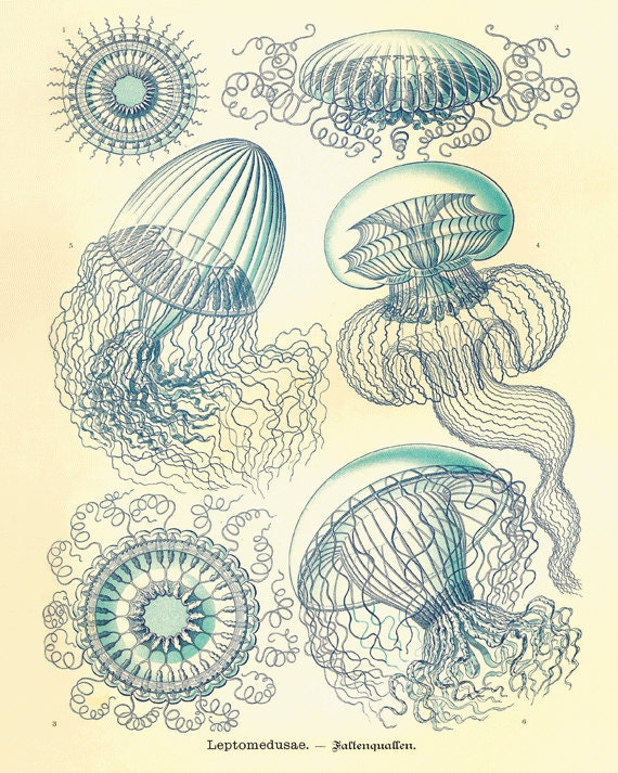 Jellyfish art print vintage prints old prints nautical art for Vintage ocean decor