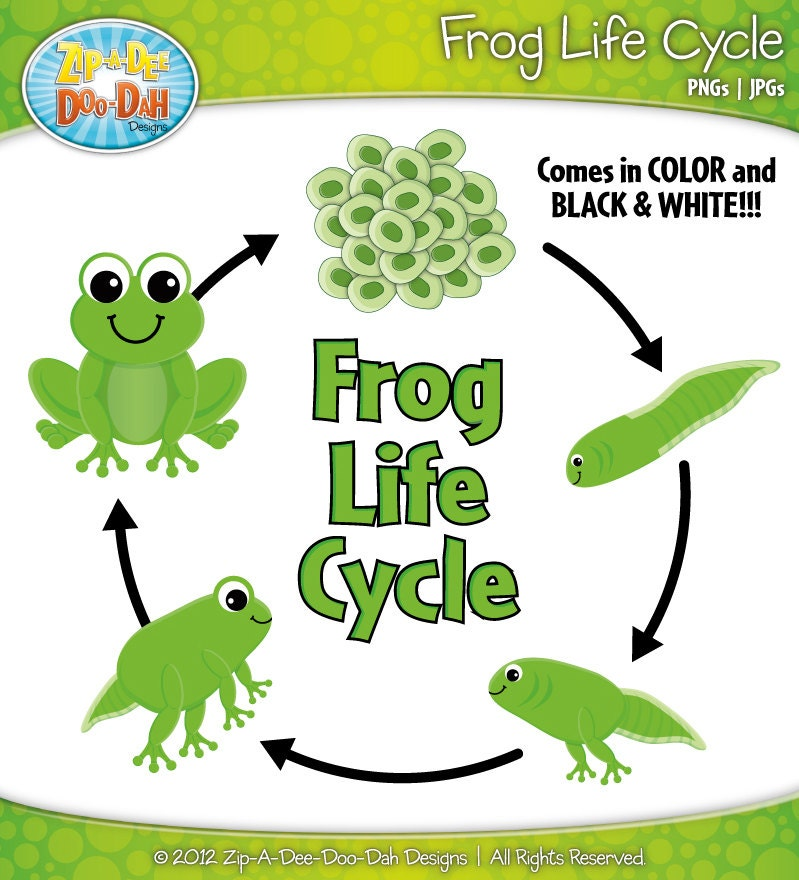Frog Life Cycle For Kids Frog Life Cycle Clipart Set