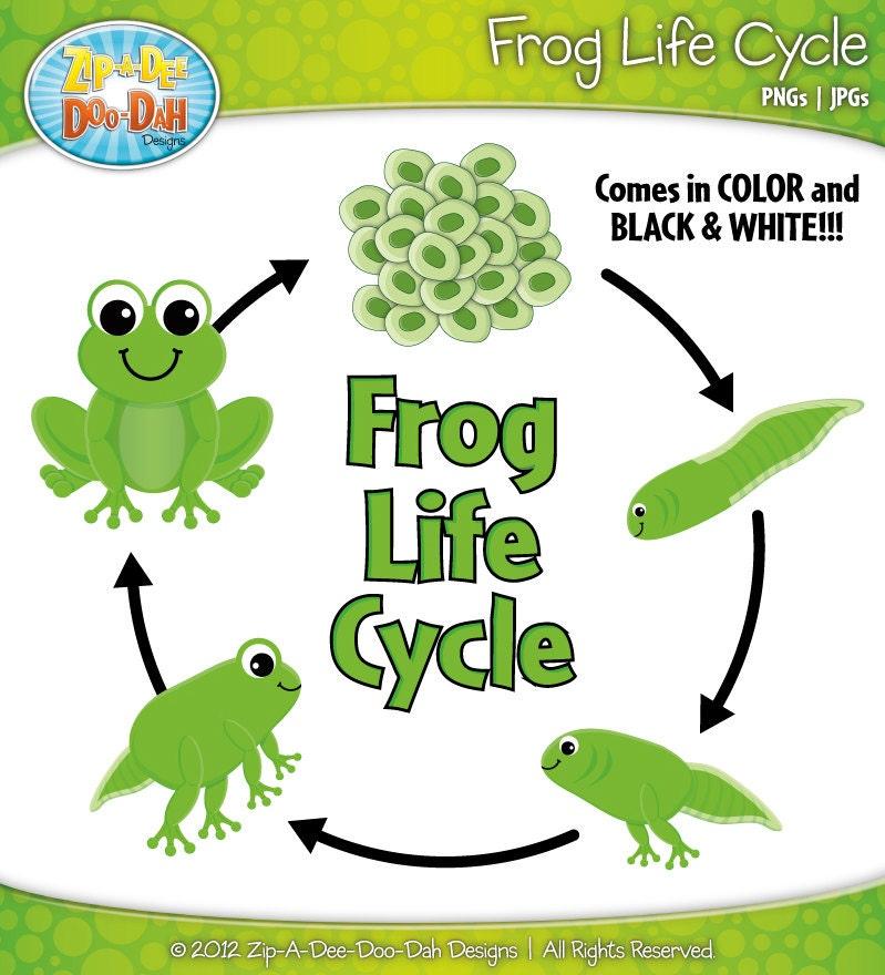 Frog life cycle eggs - photo#22