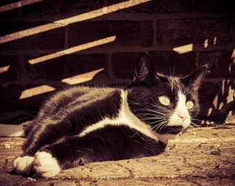 SALE Cat Photograph, Print Wall Art, Brown, Black, Warm Sun, Cat Bathing in the Sun, Black and White, Cute Animal, Pet Photography