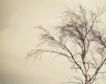 SALE Winter Tree Photography, Print Wall Art, Nature, Bare Tree, Seasonal, Cream and Brown, Sqaure Format Print