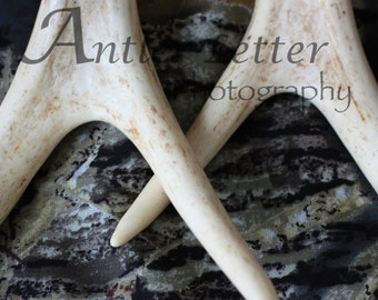 SALE-Letter M/W, Antler, Whitetail Buck Shed, Photography, Alphabet, Hunting