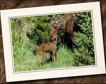 3 Moose Photo Note Cards - Moose Note Card Set - 5x7 Moose Cards - Blank Note Cards Handmade - Moose Greeting Cards With Envelopes (IN2)