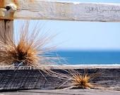Drifted : Henley Beach, South Australia