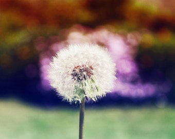 Make A Wish, Dandelion Print, Nature Photography, Nursery Art, Flower Photography