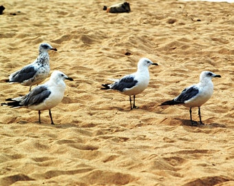 Sea Gulls by the Seashore, browns, birds, beach