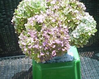 Digital download - Hydrangea Flower Photo - Lime Green and Purple Hydrangea - Invitation - Post Cards