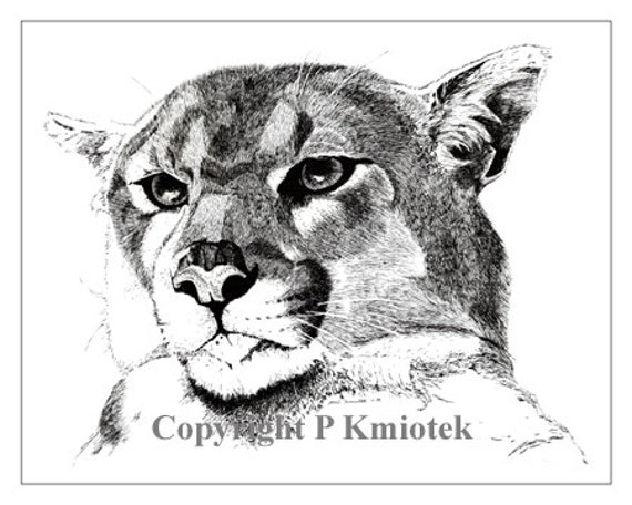 Cougar Pen And Ink Print Puma Mountain Lion By Kmiotekartworks