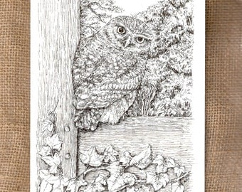 Little Owl - Pack of 3 x A5 Greetings Cards