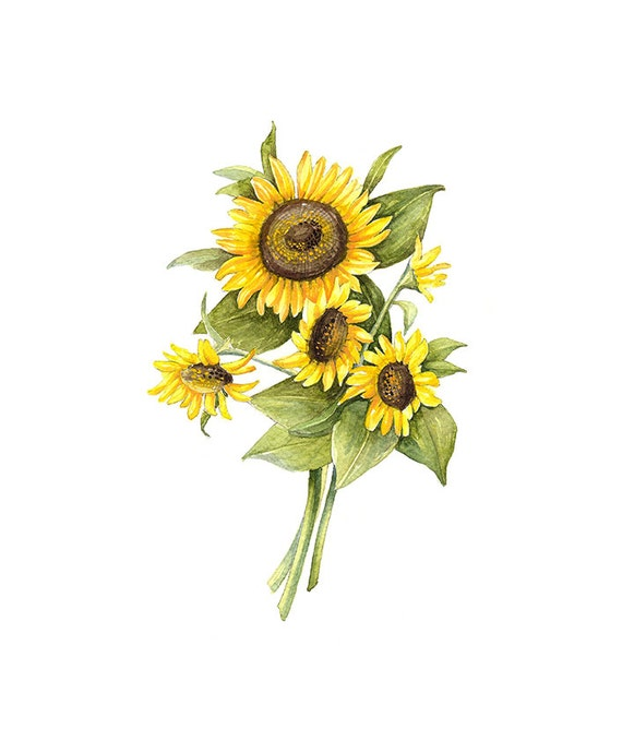 Mesmerizing image in printable sunflower