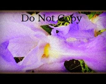 Watercolor Iris Digital Photograph