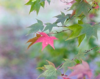 Fall leaves, fine art photographic print in pastel colors, Autumn at Westonbirt Arboretum, England