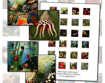 Antique Water Science inchies 1 inch square digital collage sheet 25.4mm coral pond radiolaria fungus
