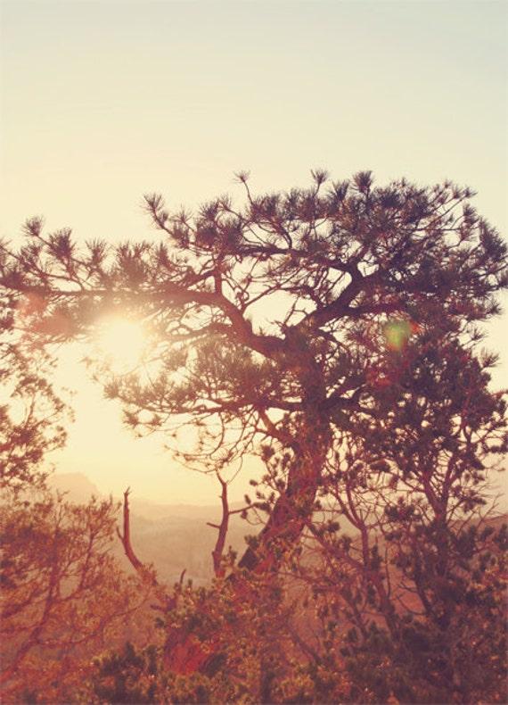 Bryce Canyon A.M. - approx 18x13cm / 5x7in fine art glossy photo print - USA, America, sunrise, sunrays, tree, silhouette, landscape, fpoe