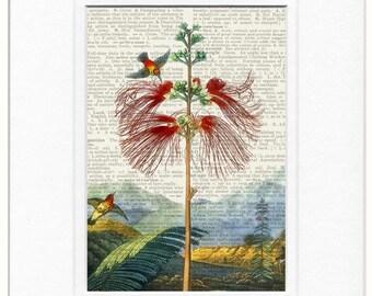 18oo's hummingbird print