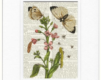 Flower Print VIII