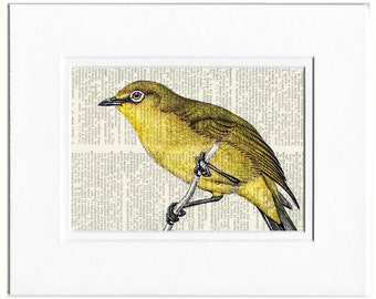 Bird print, passerine I