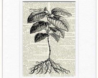 18oo's herbaceous perennial print