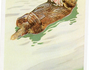 Vintage Russian postcard Otters USSR Russian red book, 3rd edition, Enhydra lutris