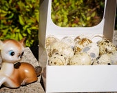 Box of Twelve Handblown Speckled Quail Eggs