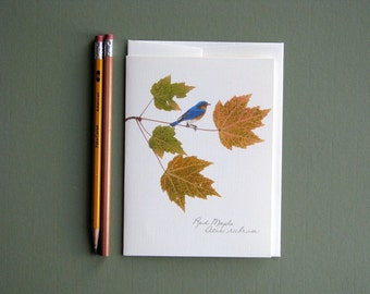 Autumn Maple leaves with blue bird, bird on branch, pressed fall leaves, greeting card, no.1054