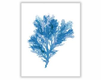 Seaweed Print Vibrant Blue Botanical Artwork, Ocean, Coastal Living, Beach, 8x10, Wall Decor, Matted Print, Cyan