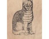 Cat Patch Antique Print