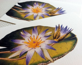 Water Lily Note Cards - Set of 8