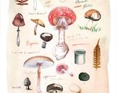 Mushroom print, Watercolor mushroom painting, Kitchen print, Botanical art, 8X10 print, Vegetable print, Giclee print, Kitchen wall decor