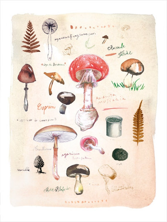Mushroom print, Watercolor mushroom painting, Kitchen print, Botanical art, 8X10 print, Vegetable print, Giclee print, Kitchen wall decor