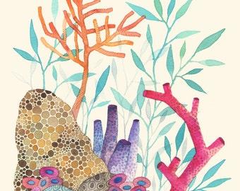 Coral Reef 8x10 print