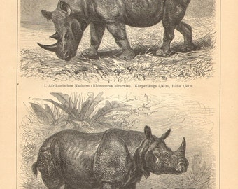 1904 Rhinoceroses, Hook-lipped Rhinoceros and Indian Rhinoceros Original Antique Engraving to Frame