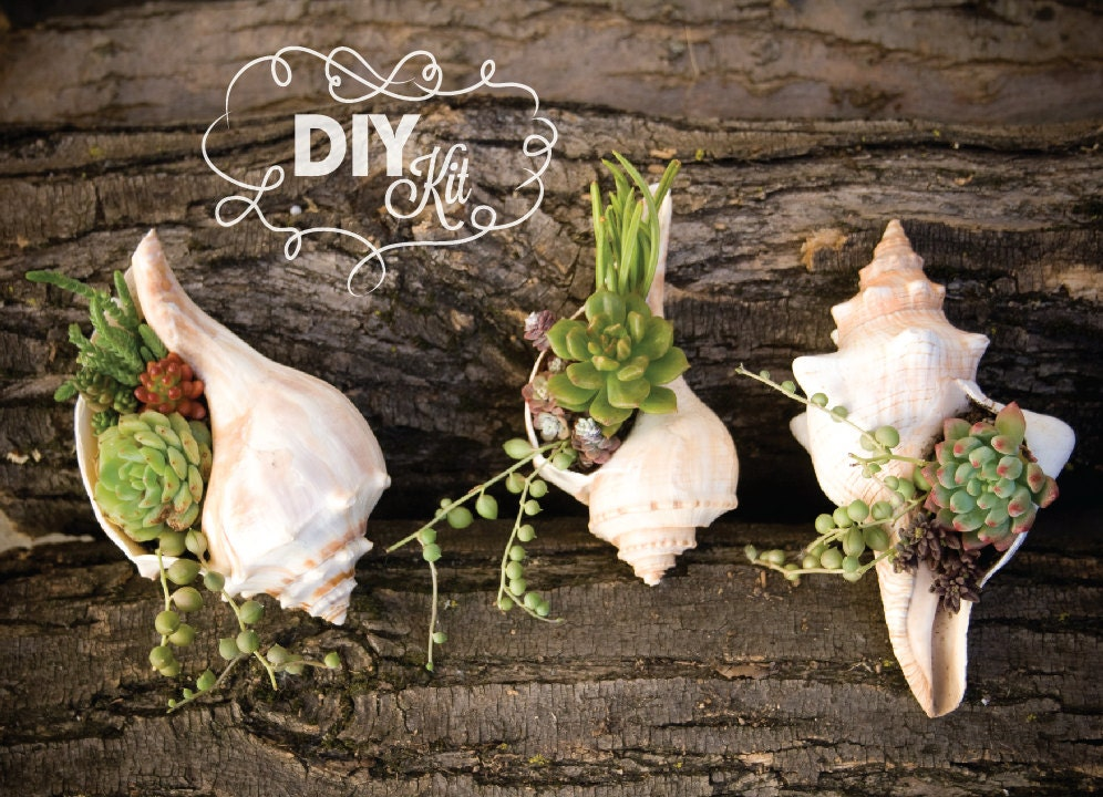 Diy succulent mini garden seashells sea shell terrarium for Shell diy